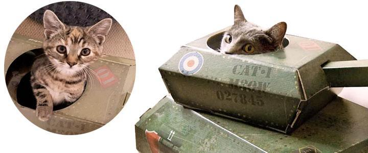 Casa de juegos para gatos